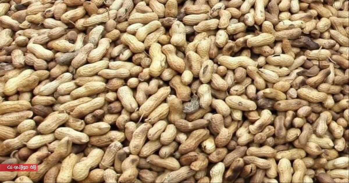 الفول السودانيّ والحمية الغذائية