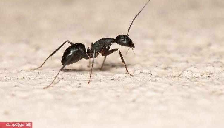كيف تكافحي النمل وتتخلصي منه في منزلك